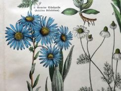 23rd April 2019. Schubert Botanical Prints